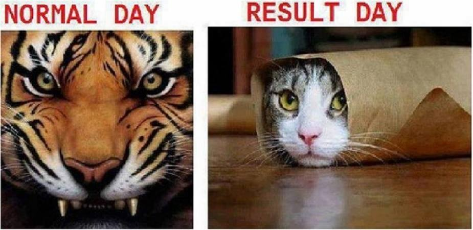 How every student feels on exam result day. Don't stress. Remember we're here to help for alll your assignments #Proofessor